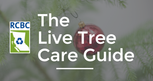 Live Christmas Tree Care